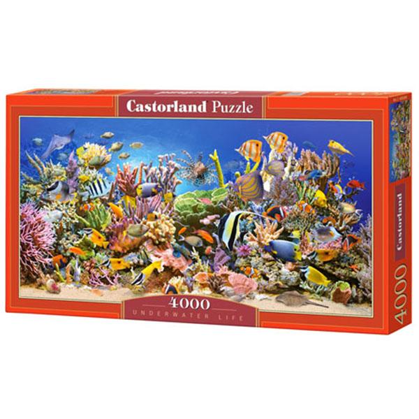 C400089_Underwater life